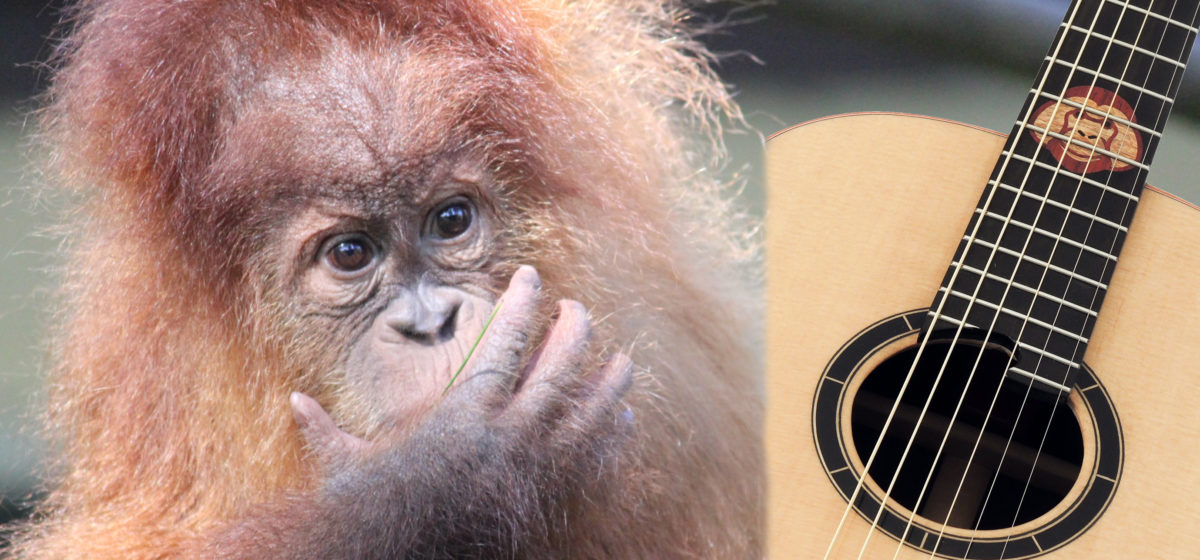 Donation Guitar Orang Utan Fans for Nature